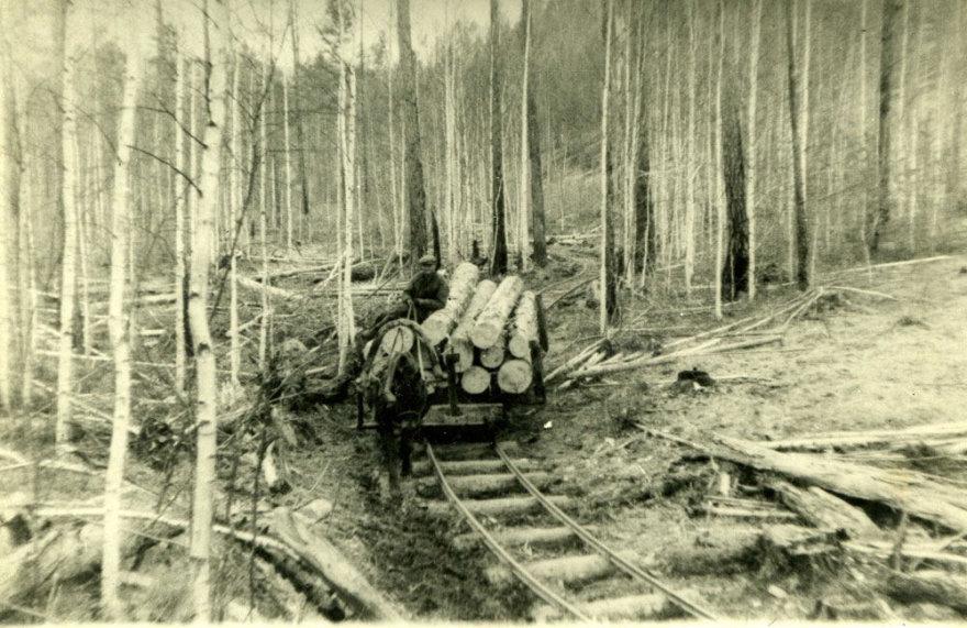Lietuviai tremtyje. Su arkliuku bėgiais veža mišką. Novostrojka, Zaigrajevo r., Buriat-Mongoljos ASSR (d. Buriatijos respublika), apie 1955-1956 m.