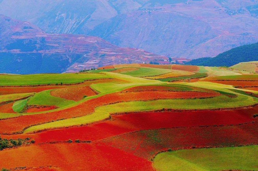 Raudoni Kinijos laukai