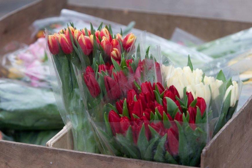Tulpės – populiariausios gėlės kovo 8-ąją