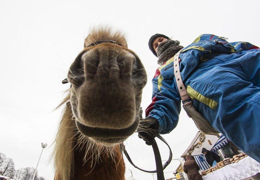 Dusetose vyksta tradicinės Sartų žirgų lenktynės.