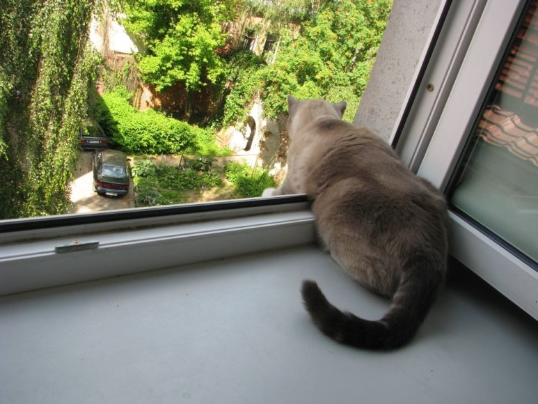 Katinas ant palangės