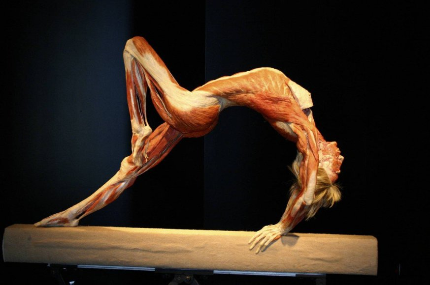 Body Worlds Vital eksponatai