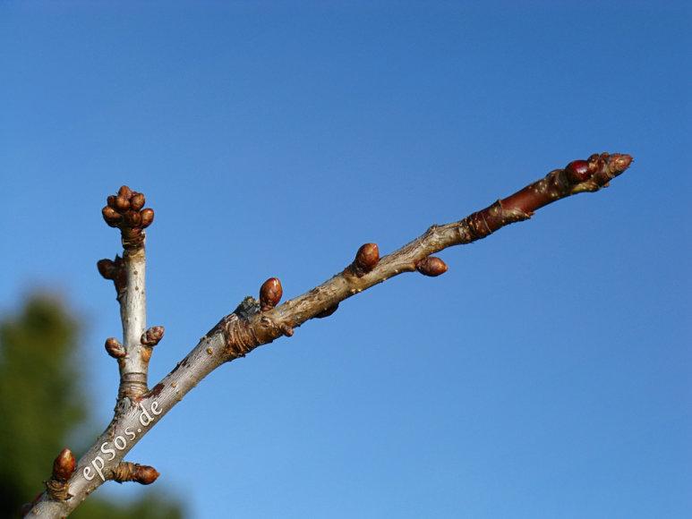 Pavasaris priverčia visus žydėti
