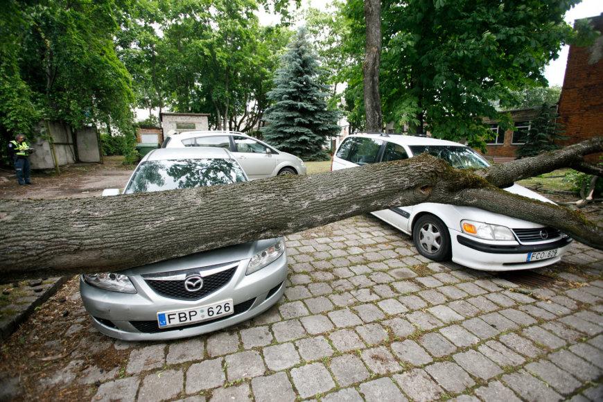 Kaune ant automobilių užvirto medis