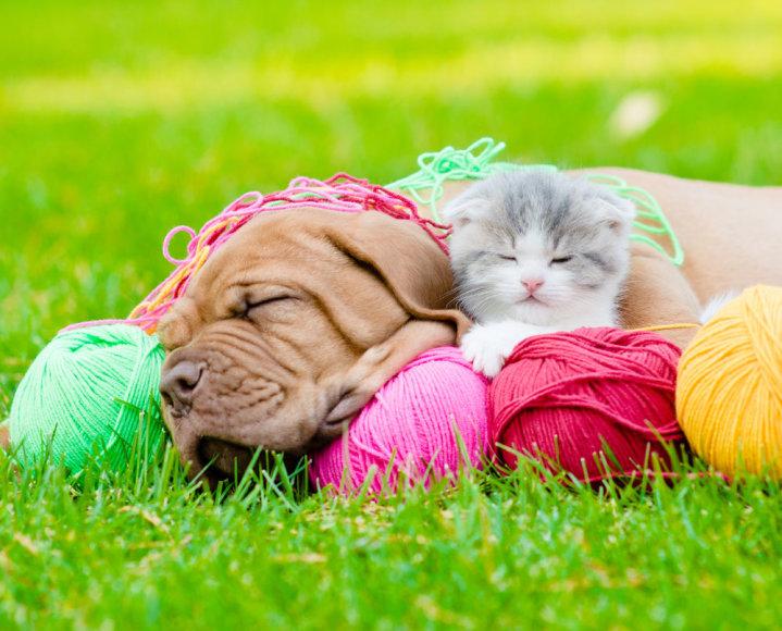 Šuns ir katino draugystė.