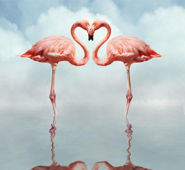 Rožiniai flamingai