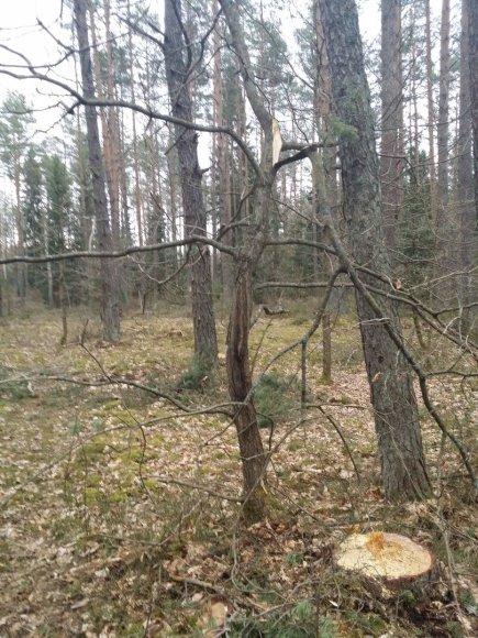 Miško sąvartynas netoli Bezdonių