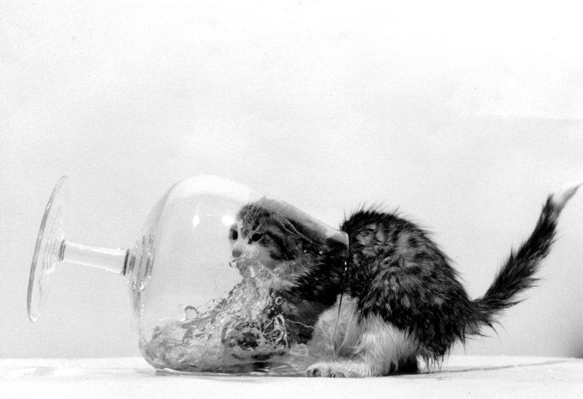 Kačiukas stiklinėje