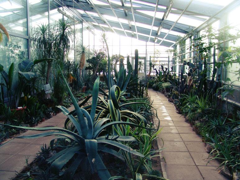 VDU Kauno botanikos sodas žiemą