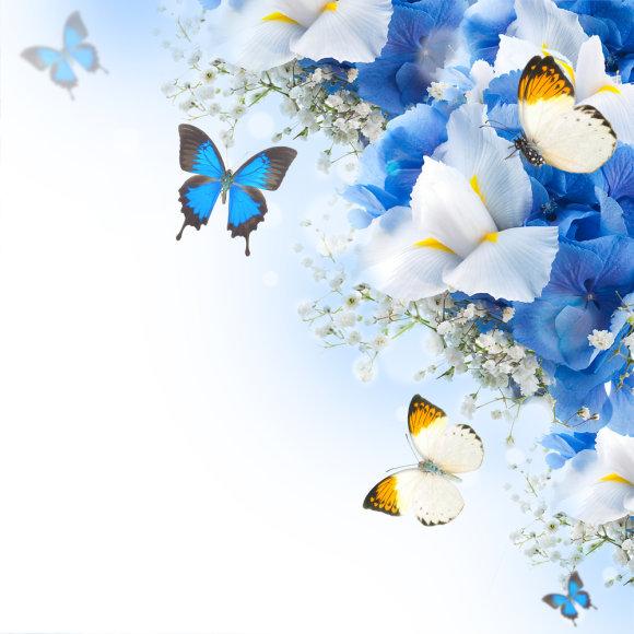 Gėlės ir drugeliai
