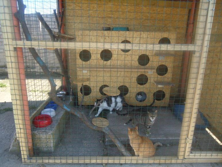Kačių daugiabutis