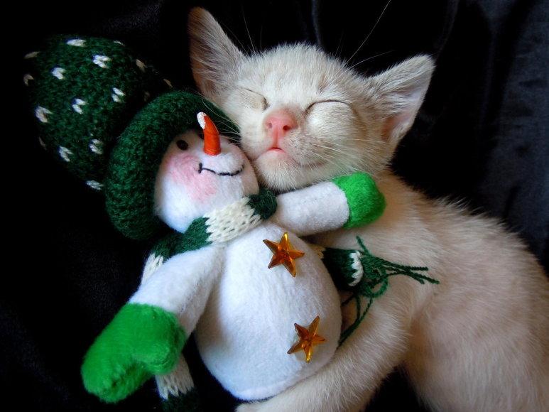Kačiukas