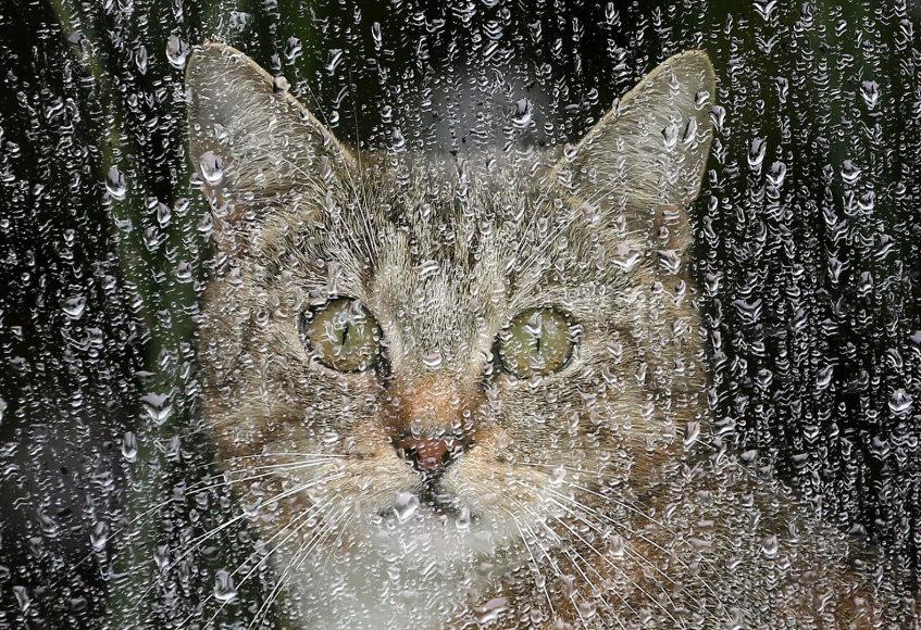 Kisinių kaimo gyventojus baugina šiukšlių konteineriuose nugaišusios katės.