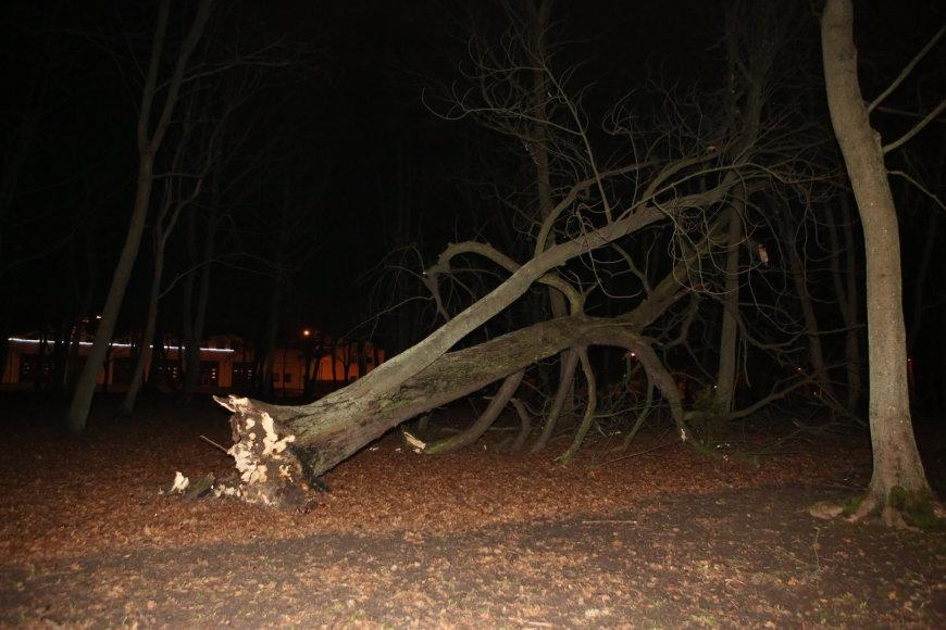 Audros nulaužtas medis Klaipėdos skulptūrų parke