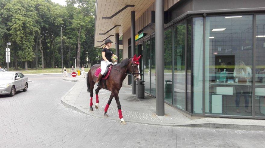 Mergina ant žirgo