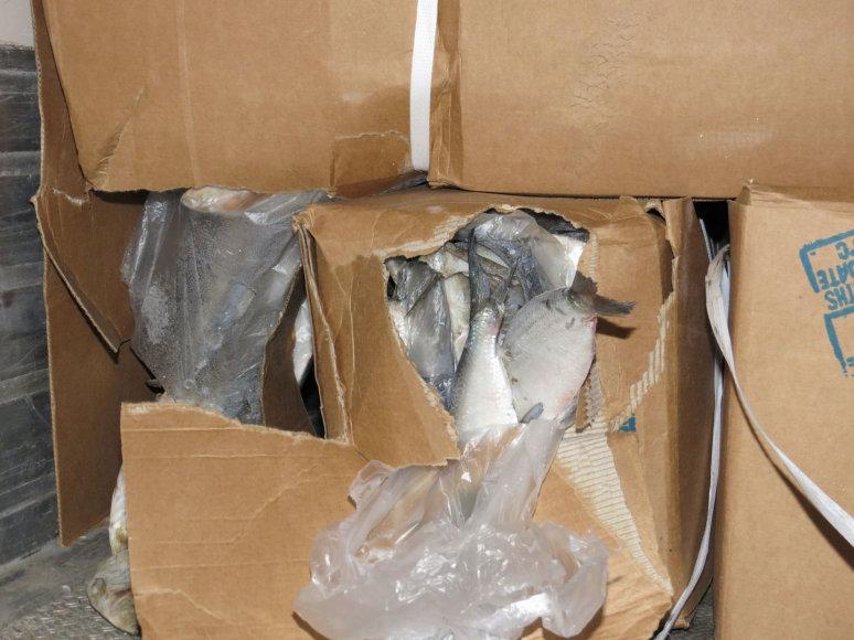 Cigarečių kontrabanda po žuvies kroviniu