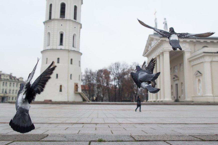 Lapkričio diena Vilniuje