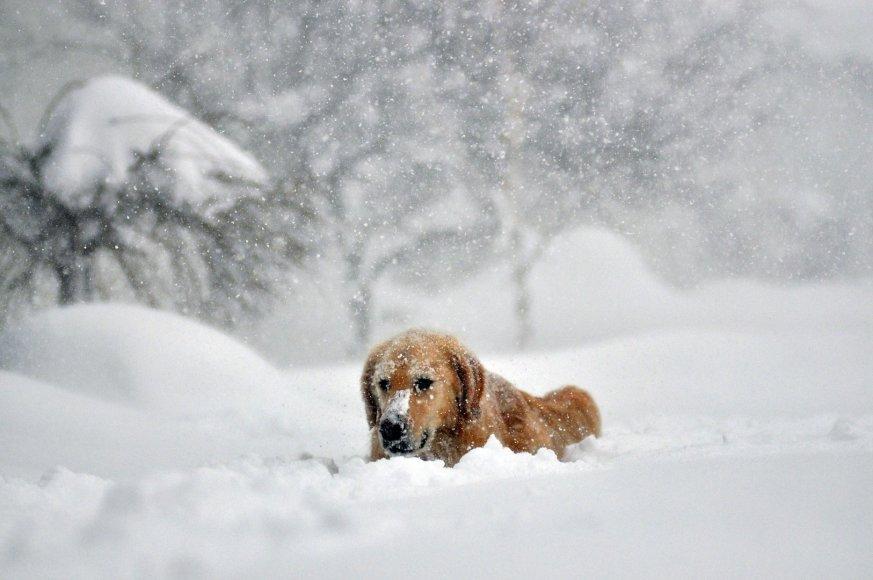 Šuo sniege