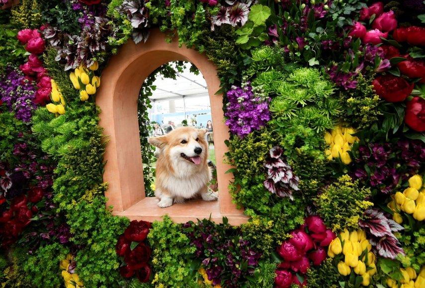 """Reuters""/""Scanpix"" nuotr./Čelsio gėlių paroda"