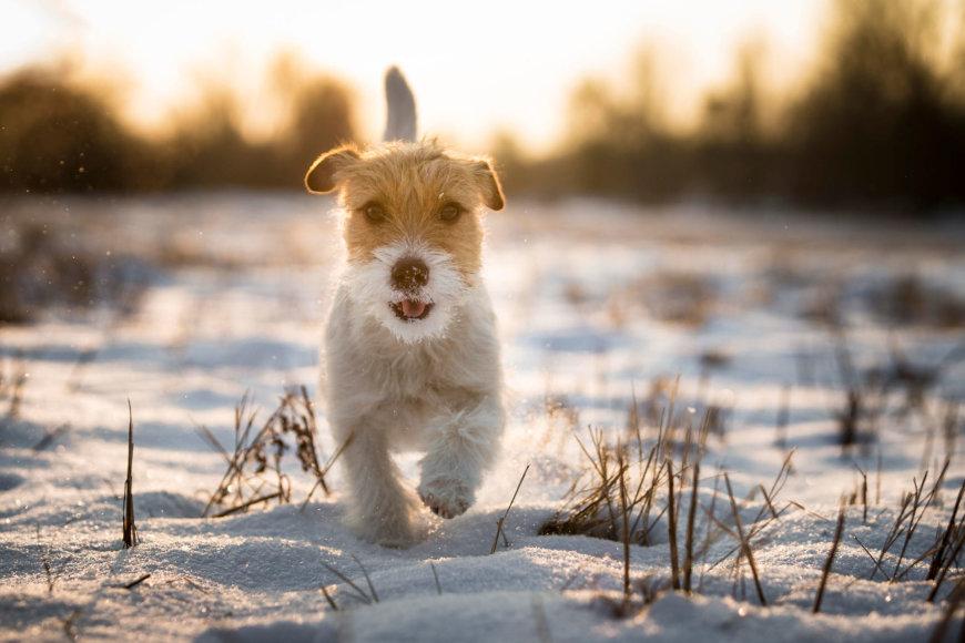 Vida Press nuotr./Bėgantis šuo