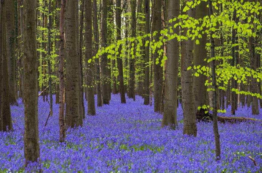 Pasakiškas Belgijos linksmių miškas