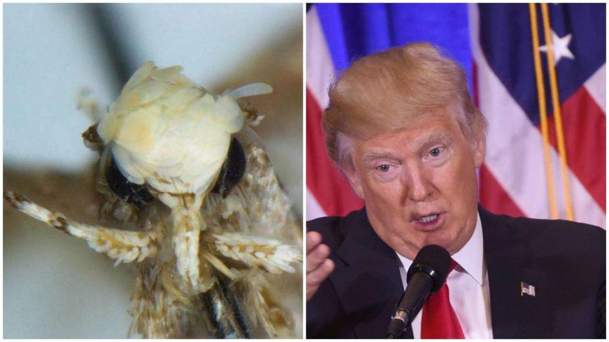 Donaldo Trumpo vardu pavadinta nauja kandžių rūšis