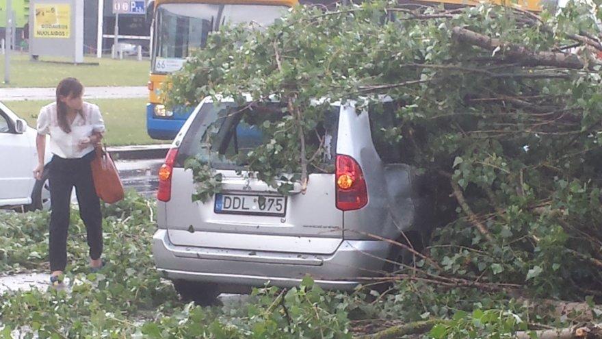 Žirmūnuose medis prispaudė automobilį