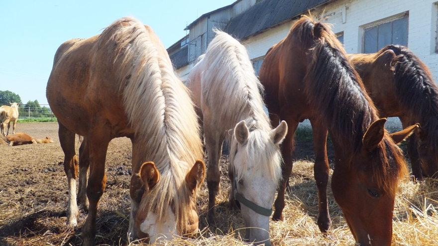 Beglobiai žirgai laukia naujų šeimininkų
