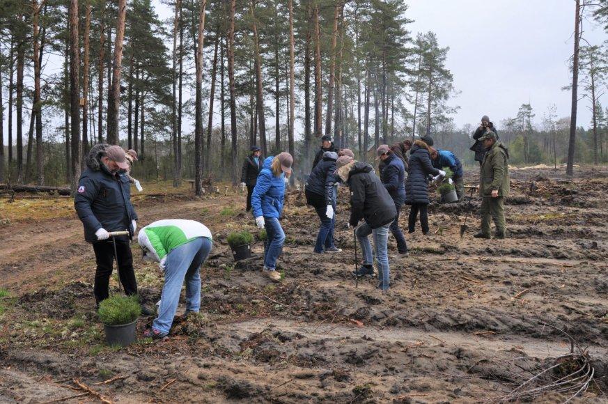 Vienas iš netikėtumų – į programą įtrauktas miško sodinimas