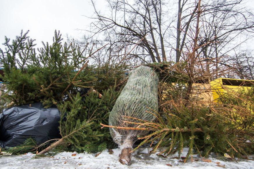 Kalėdinės eglutės prie šiukšlių konteinerių
