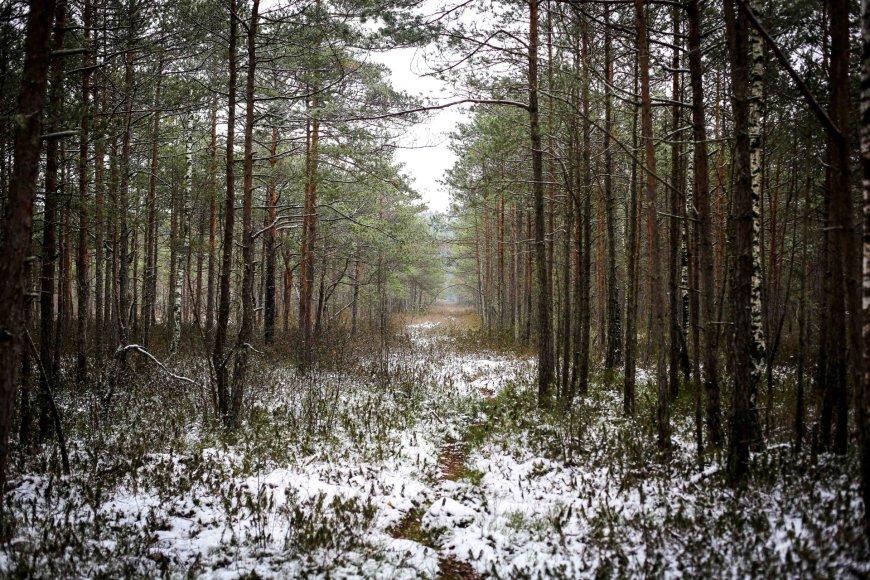 Ilgesingas Varnikų šauksmas: pasigrožėti šlapiu sniegu apdribusia gamta