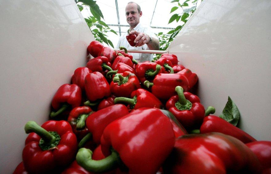 Raudonoji paprika