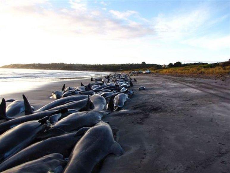 Banginiais ant kranto