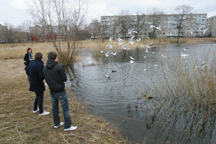Draugystės parko tvenkiniai itin mėgstami aplinkinių kvartalų gyventojų.
