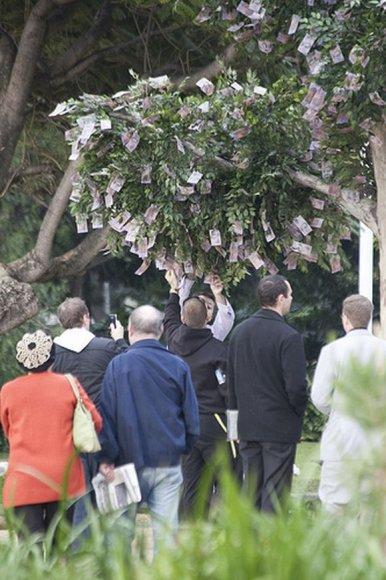 Pinigų medis Sidnėjuje
