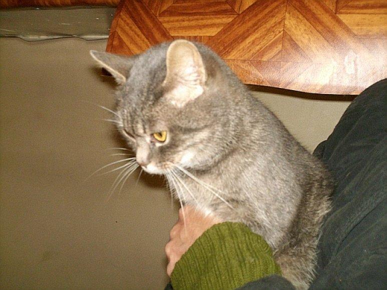 Katė Milkė