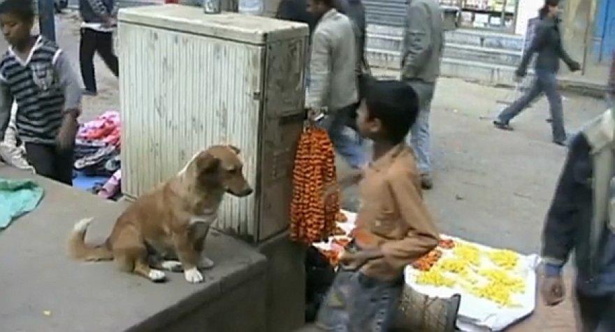 Benamis šuo Katmandu gatvėje