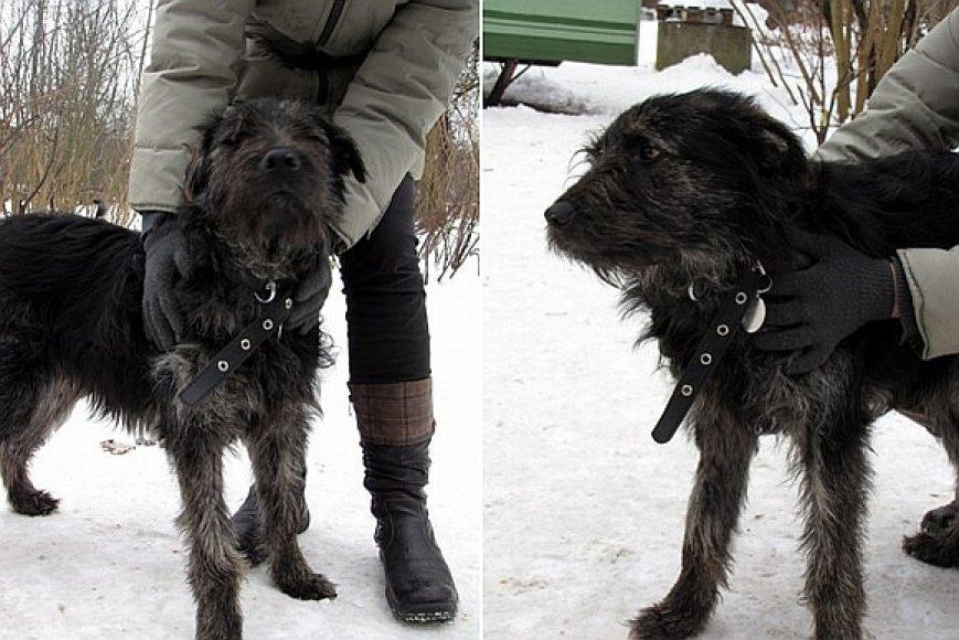 Užsieniečio išgelbėtas šuo Žakas