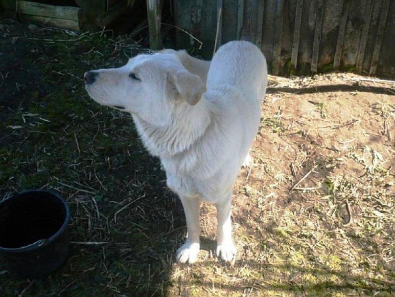 Salininkuose rastas šuo