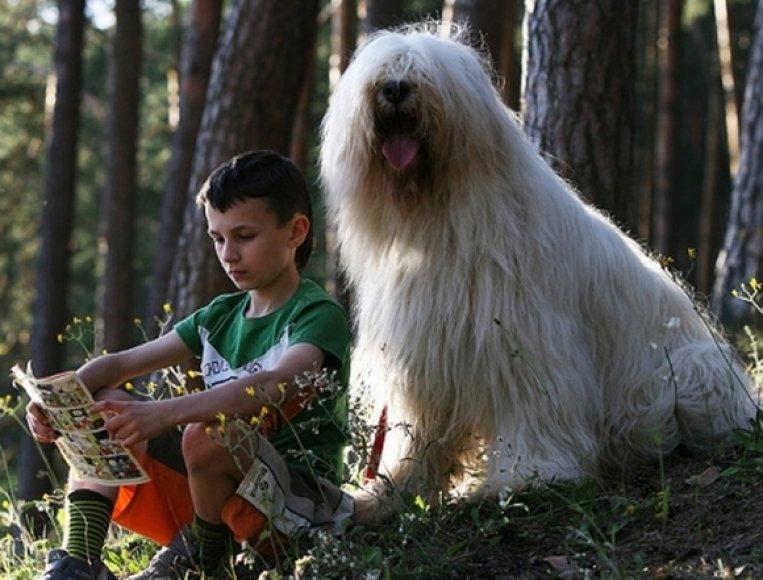 Skaitantis berniukas ir šuo