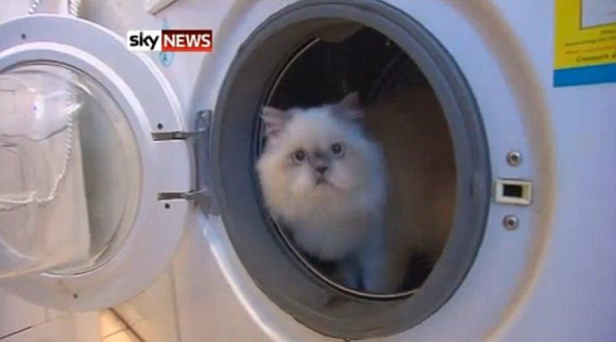 Katė Kimba ištvėrė 30 minučių skalbimo ir gręžimo ciklą.