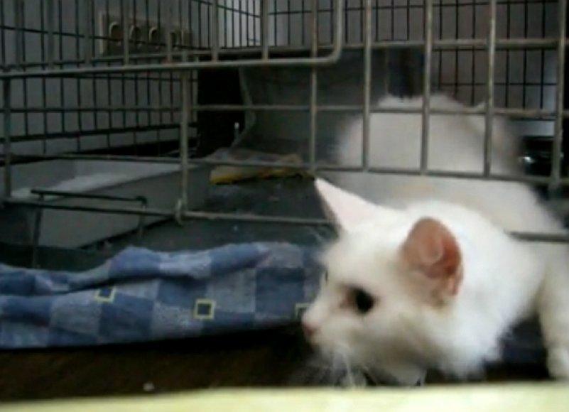 Didysis katytės Gilės pabėgimas, užfiksuotas vaizdo kamera