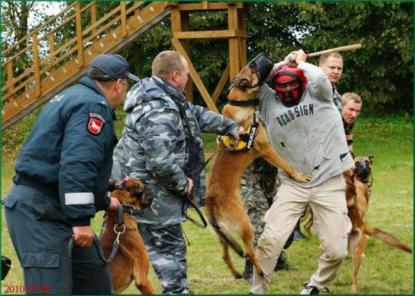 Tarnybinių šunų mokymai