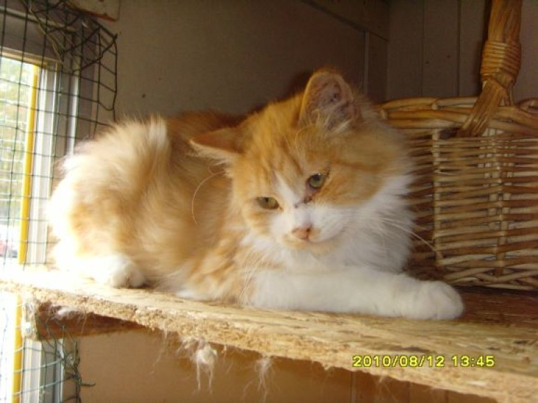 Katinas Ugnius