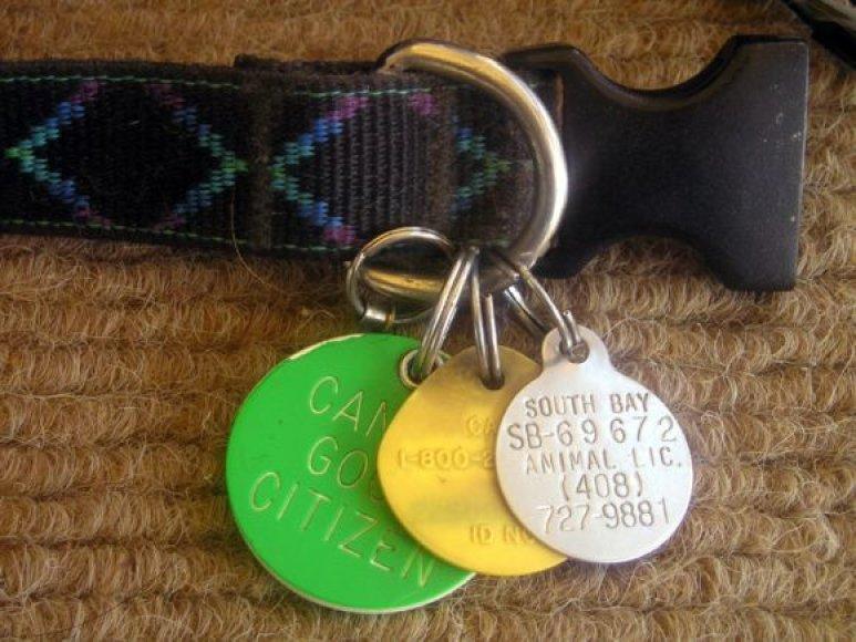 Šuns antkaklis su identifikaciniais žetonais