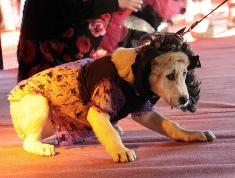 Neįprastos situacijos gali išgąsdinti šunį.