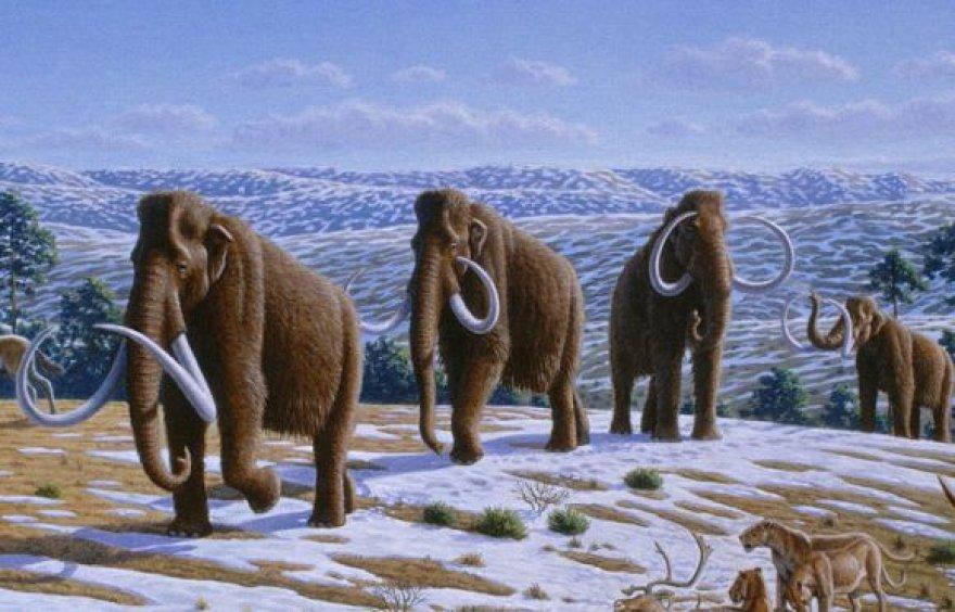 Mamutai