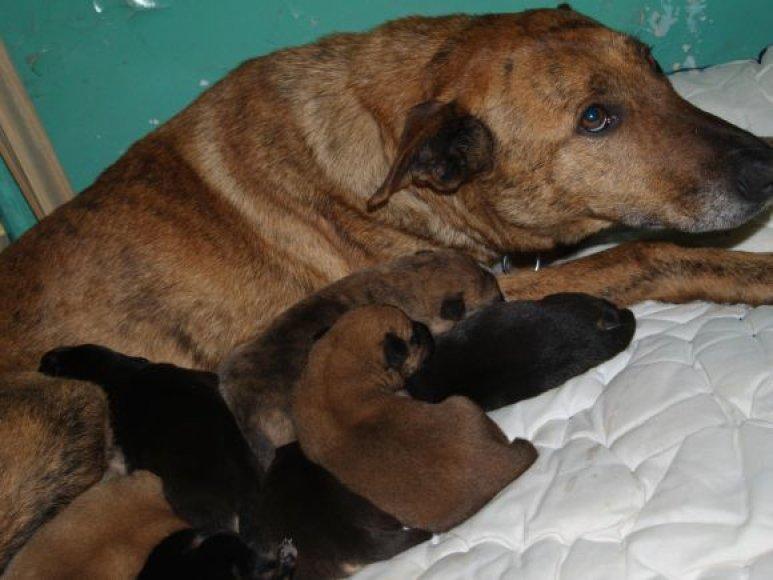 Išgelbėtai kalytei ir jos šuniukams dabar reikės surasti naujus šiltus namus.