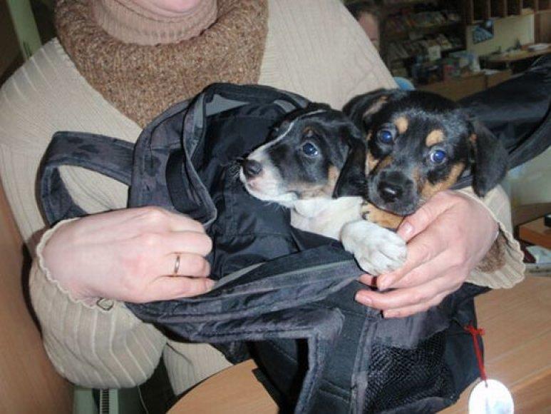 """Šios dvi rastinukės taip pat pateko į """"SOS gyvūnų"""" globą."""