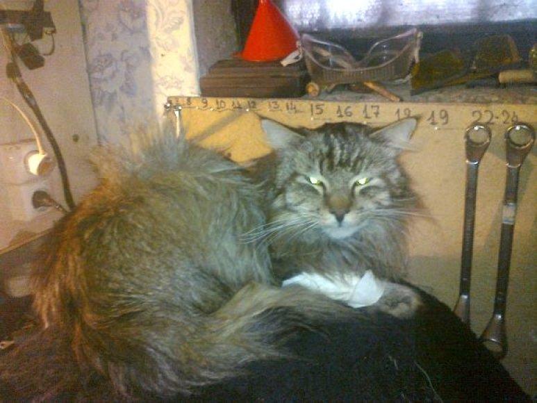 Dabar katinėliui tenka glaustis pagelbėjusio vyriškio rūsyje.